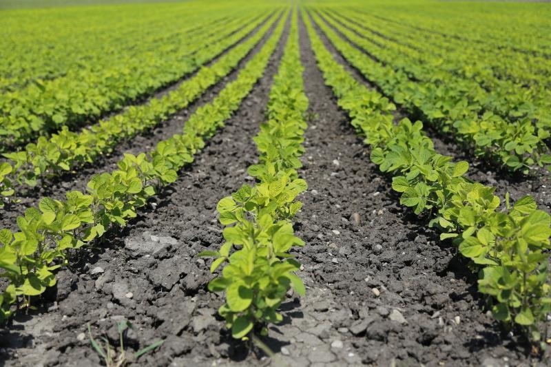 landwirtschaft pflanzenbau derossi